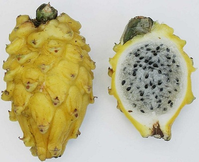 superfruit-pitahaya-amerilla-yellow-pithaya-white-coloured-flesh